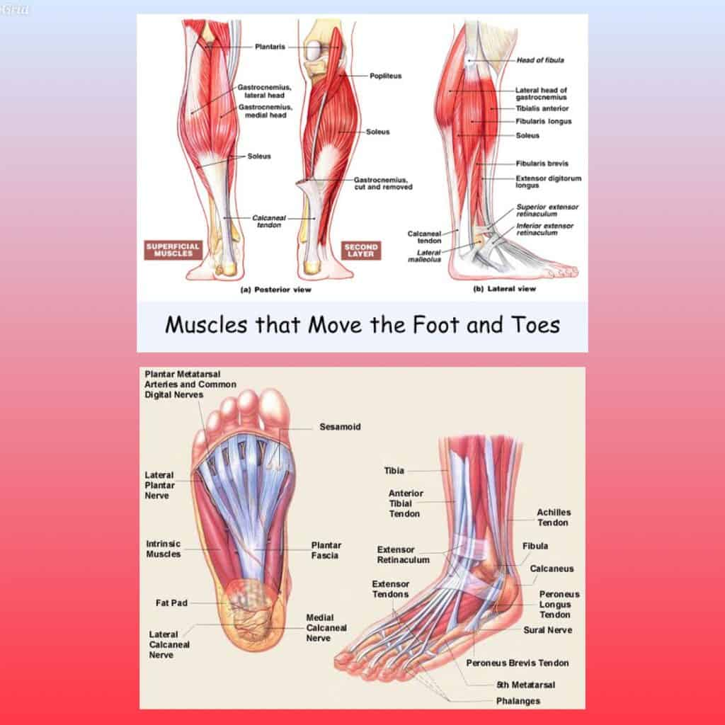 Runners Foot Strength and Mobility